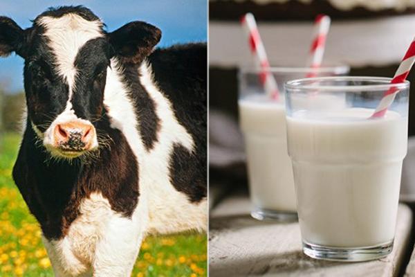 Sữa dê