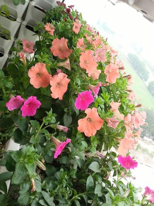 HN: Mẹ chi 3 triệu trồng tháp rau sạch 10 tầng cho con - 4