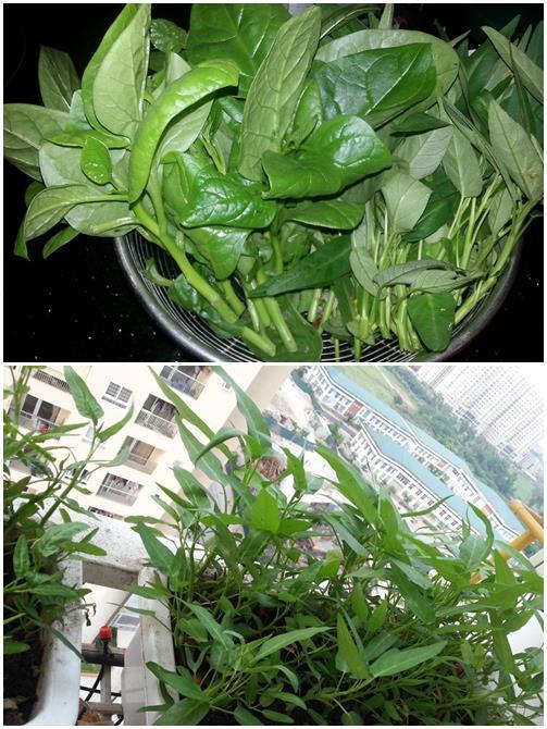 HN: Mẹ chi 3 triệu trồng tháp rau sạch 10 tầng cho con - 8