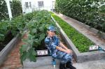 Trung Quốc công bố hình ảnh trồng rau, nuôi lợn trên đá Chữ Thập