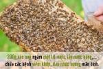 Bất ngờ với cách chữa bệnh cực hay từ côn trùng