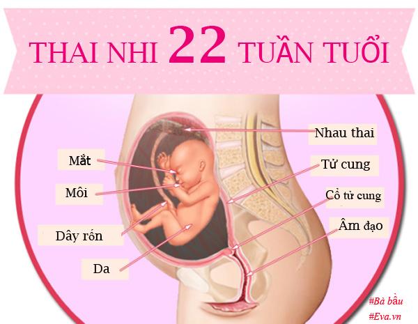 Siêu âm thai tuần 22: Cột mốc quan trọng mẹ bầu đừng bỏ qua