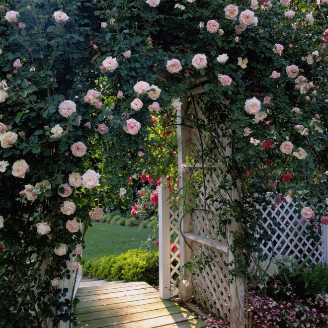 18 cách cực hay mà đơn giản để làm mới sân vườn nhà bạn - Ảnh 15.