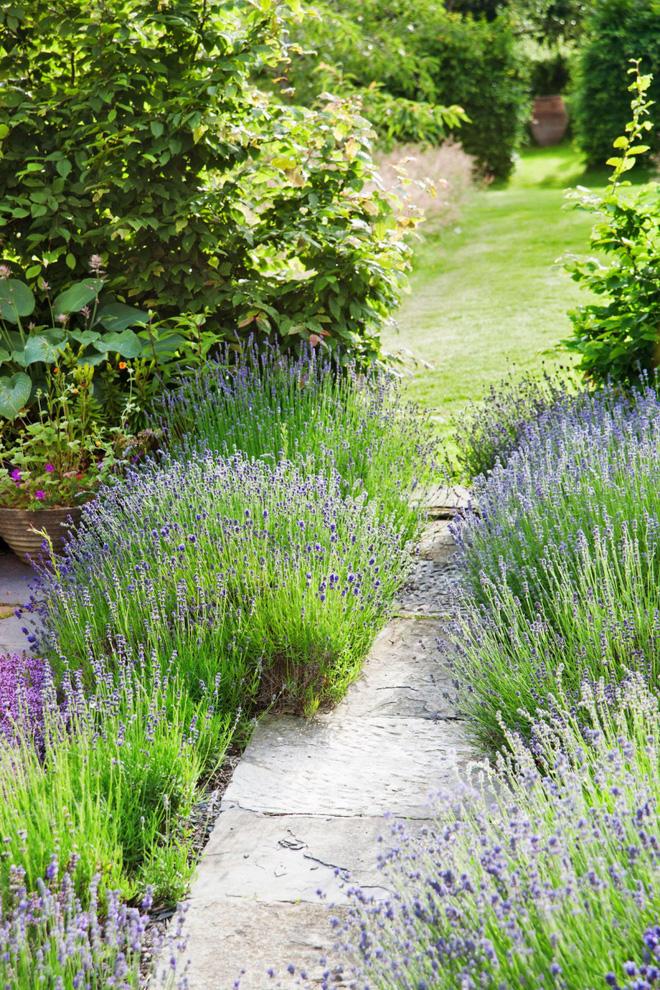 18 cách cực hay mà đơn giản để làm mới sân vườn nhà bạn - Ảnh 1.
