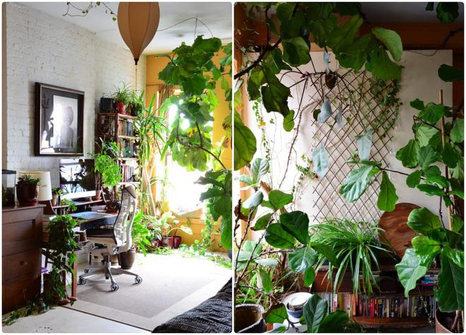 Cô gái độc thân biến căn hộ nhỏ ở chung cư cao tầng của mình thành vườn cây trong phố - Ảnh 11.
