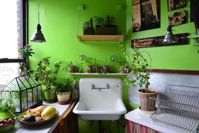 Cô gái độc thân biến căn hộ nhỏ ở chung cư cao tầng của mình thành vườn cây trong phố - Ảnh 5.
