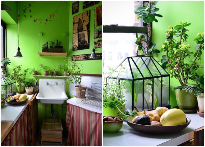 Cô gái độc thân biến căn hộ nhỏ ở chung cư cao tầng của mình thành vườn cây trong phố - Ảnh 6.