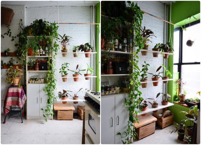 Cô gái độc thân biến căn hộ nhỏ ở chung cư cao tầng của mình thành vườn cây trong phố - Ảnh 7.