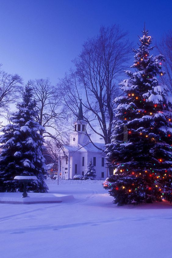 Ngôi nhà ẩn mình trong tuyết trắng với cây thông lớn, trang hoàng lộng lẫy với những dây đèn trang trí đầy màu sắc.