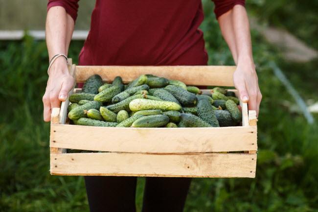 10 thực phẩm hằng ngày giúp cơ thể giải độc tự nhiên - 1