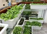 3 phương thức trồng rau tại nhà đơn giản, hiệu quả khiến chị em thích mê