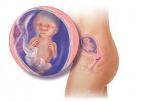 Thai nhi 17 tuần - con có thể di chuyển khớp xương linh hoạt