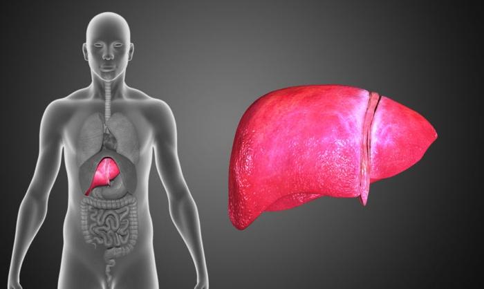 5 dấu hiệu thường gặp của bệnh gan nhiễm mỡ và cách chữa trị