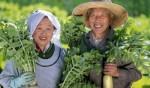 Khám phá loại thực phẩm thần kì giúp ngừa đột quỵ của Nhật Bản
