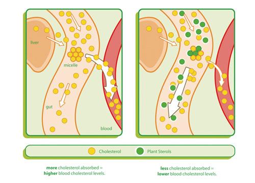 cholesterol – ban hay thu? - 2