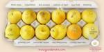 Bức hình 12 trái chanh đã cứu sống bệnh nhân ung thư vú