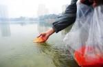 Cúng ông Công ông Táo: Thả cá chép thế nào mới đúng?