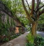 Ghé thăm ngôi nhà đẹp hiện đại nhìn đâu cũng thấy cây xanh