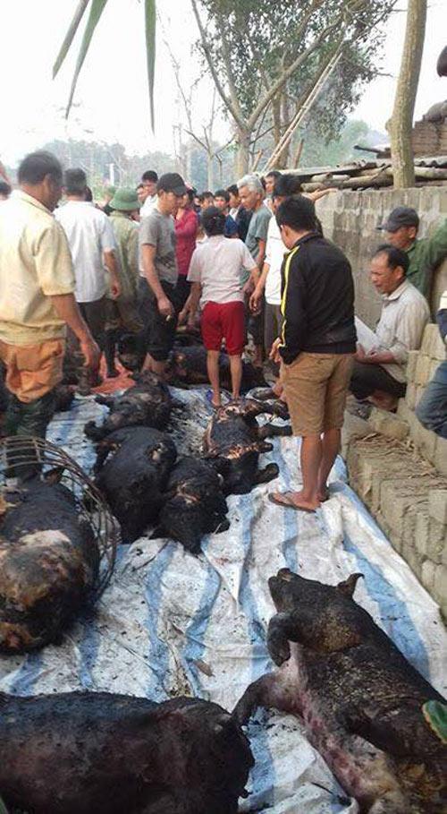 Đốt rác cháy cả trang trại, gần 70 con lợn bị thiêu đen thui, chủ hộ khóc ròng
