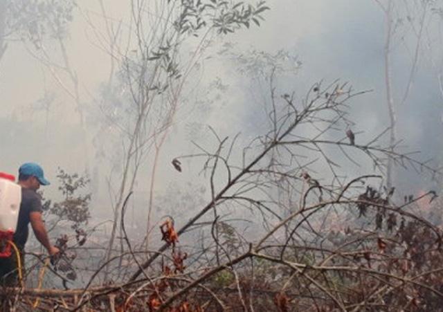 Do đám chảy cách xa lộ lớn, người dân và kiểm lâm phải vác từng can nước lên rừng dập lửa