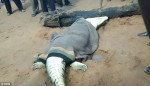 Hãi hùng phát hiện thi thể bé trai 8 tuổi khi mổ bụng cá sấu