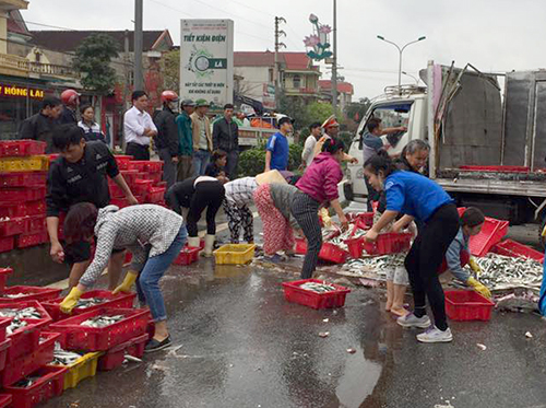 Người dân Hà Tĩnh ra giúp tài xế thu gom cá đổ tràn giữa đường. Ảnh: Đ.H