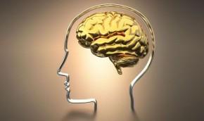 Còn tiếp tục những thói quen này thì não sẽ bé lại như não đà điểu