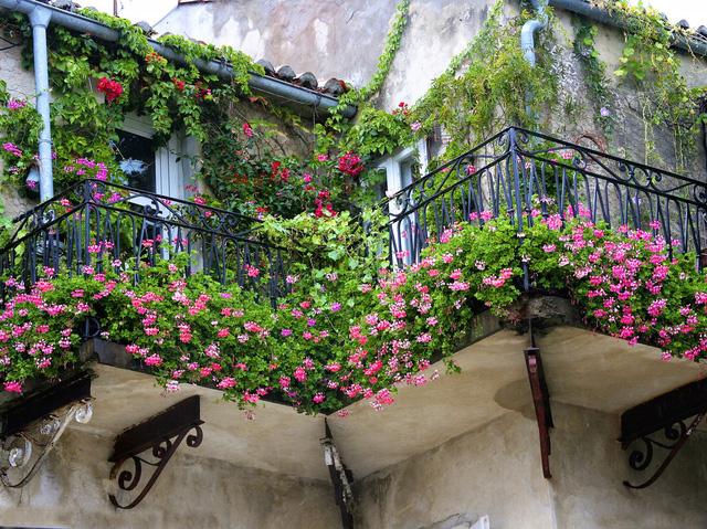 4. Nghẹt thở dưới một vườn hoa ban công đẹp xuất sắc.