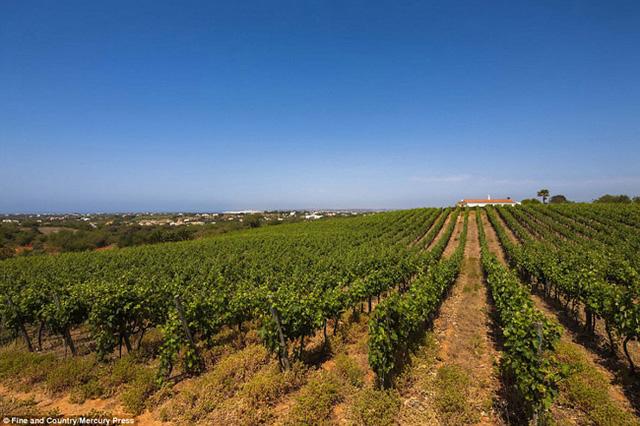 Biệt thự nằm trên đỉnh một ngọn đồi nhỏ, nhìn xuống vườn nho thoai thoải và phía xa xa là bờ biển Albuferia tuyệt đẹp.