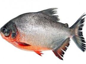 Cách làm cá chim nấu ngót, món ăn giải nhiệt ngày hè
