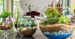 15 phút để có một khu vườn trong lọ thủy tinh cực đẹp và sáng tạo