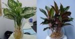 Khó đến mấy cũng nên tìm mua 3 loại cây này đặt lên bàn thờ, tài lộc may mắn kéo đến ùn ùn