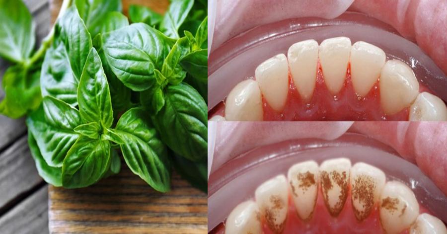 """""""Sốc"""" với loại rau chưa đến 5 nghìn diệt sạch ố vàng, mảng bám răng trong tích tắc"""
