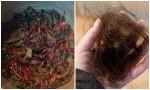 Bất ngờ khi gội đầu với nước luộc rau dền, tóc rụng cả nắm cũng khỏi lại còn mọc dày gấp 2 lần