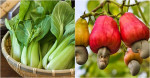 Top 11  loại rau quả chứa nhiều sắt như thịt đỏ