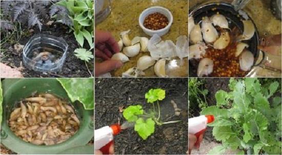 Những mẹo chăm sóc cây trồng hữu ích để cây trồng, rau củ quả không bao giờ bị bệnh