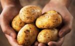 """Mua khoai tây cứ nhẩm trong đầu 4 """"thần chú"""" sau thì chắc chắn 10 củ ngon cả 10"""