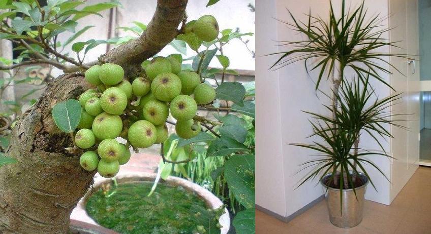 7 loại cây HÚT SẠCH BỨC XẠ của sóng từ điện và wifi, nhà có trẻ nhỏ mẹ nhớ phải trồng ít nhất 1 cây để bảo vệ con