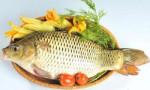 Đông y chuyên trị 5 căn bệnh nguy hiểm bằng thịt cá chép mà ai cũng ngỡ ngàng