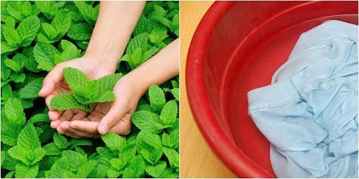 Bí quyết tạo nước xả làm mềm vải từ thiên nhiên không gây kích ứng da tại nhà