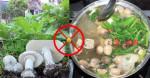 Những loại rau TUYỆT ĐỐI KHÔNG nhúng lẩu kẻo vừa ăn xong đã vội nhập viện