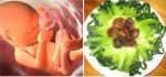 5 loại rau NHIỀU CANXI gấp 2 lần sữa bò, mẹ bầu ăn nhiều để con sinh ra cao chuẩn 52 cm, bất chấp cả gen!