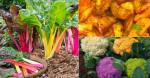 Bất ngờ 8 loại rau nhiều chắt SẮT hơn cả thịt lại giúp đẹp da, đẹp tóc, đẹp dáng và trẻ lâu!