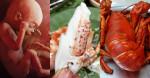 5 món hải sản giàu CANXI bậc nhất, giúp thai nhi cứng cáp, chân dài bất chấp di truyền