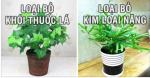 8 loại cây thanh lọc chất độc và loại bỏ bức xạ nhất định phải trồng trong nhà