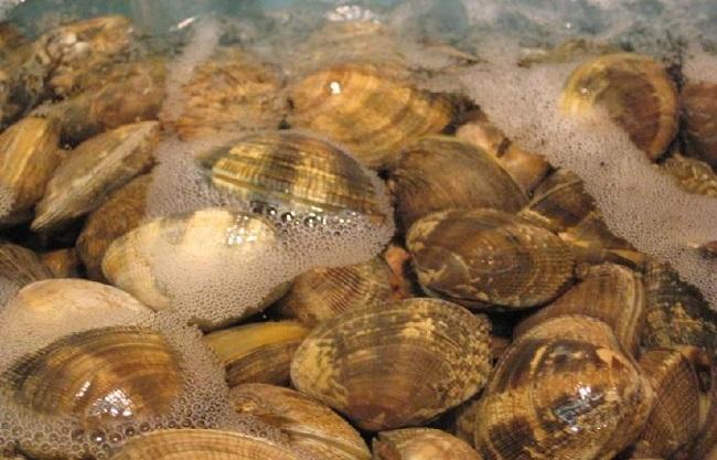 Chỉ 1 mẹo nhỏ của người Nhật mà cát trong nghêu bị đánh bay không còn 1 hạt dù là nhỏ nhất!