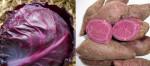 3 thực phẩm màu tím chống ung thư cực tốt, ở VN có đầy mà giá lại rất rẻ
