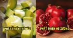 11 loại trái cây ăn vào mẹ khỏe mạnh, đỡ nghén còn thai nhi lại 'lớn nhanh như thổi'