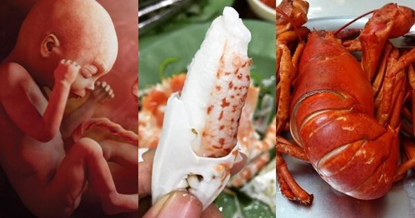 Top 5 món hải sản giàu CANXI nhất, giúp thai nhi cứng cáp, chân dài bất chấp di truyền