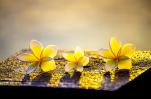 Tâm phải biết BUÔNG BỎ thì đời mới nở hoa, lòng không còn nặng nề thì thân thể mới TỰ TẠI